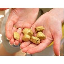 Добыча золота индивидуальными предпринимателями: мифы и реальность